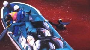 dolfijn_slachting_japan